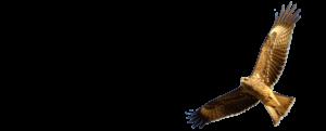 Owl-Above-2000x808px